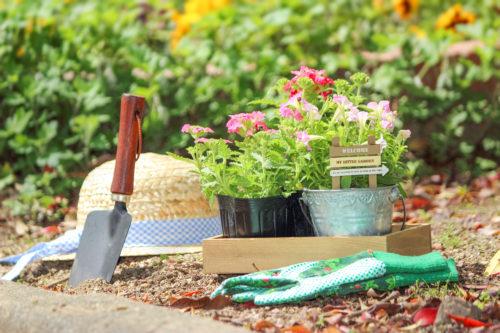 簡単ガーデニング☆お花を綺麗に長く楽しむコツとお手入れの仕方