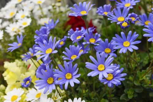 お家周りをお花でオシャレに華やかに♪簡単なガーデニングの始め方