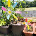 お庭が可愛くなっちゃう工作♡ペットボトルで作る風車の作り方
