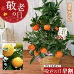 神田シトラスファーム 選べる果樹inバスケット